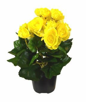 Keinotekoinen kasvi Begonia keltainen 25 cm