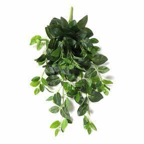 Keinotekoinen jänne Fitónia vihreä 80 cm