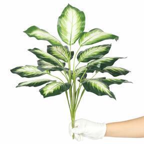 Keinotekoinen kasvi Dífenbachia valkoinen 50 cm