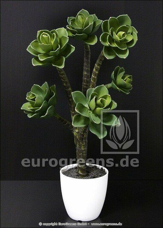 Keinotekoinen kasvi Eševéria 55 cm