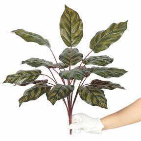 Keinotekoinen kasvi Kalatea 50 cm