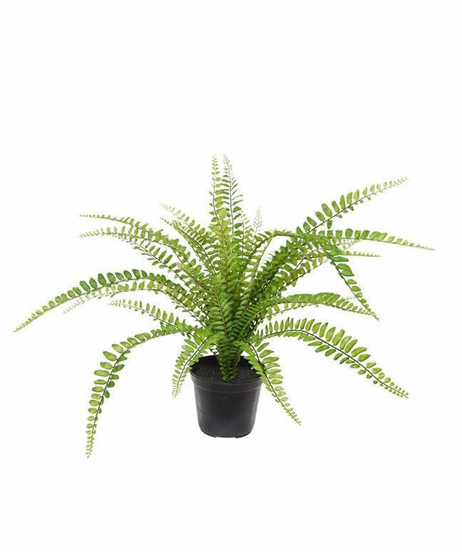 Keinotekoinen kasvi Splenenwort 45 cm
