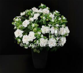 Keinotekoinen kukkakimppu belgialainen atsalea valkoinen 40 cm