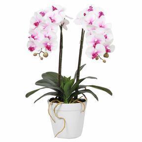 Keinotekoinen orkidea 43 cm