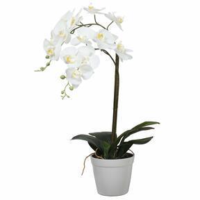 Keinotekoinen orkidea valkoinen 65 cm