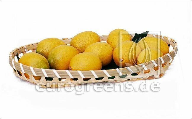 Keinotekoinen sitruuna