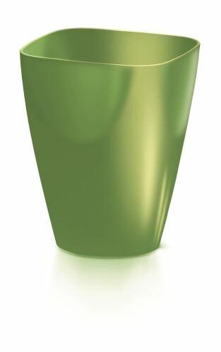 oliivi-